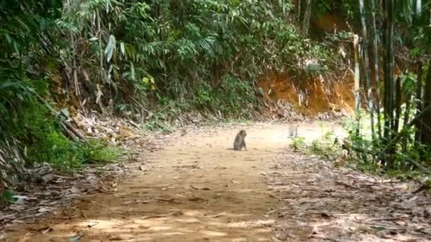 Monkey sitting on road
