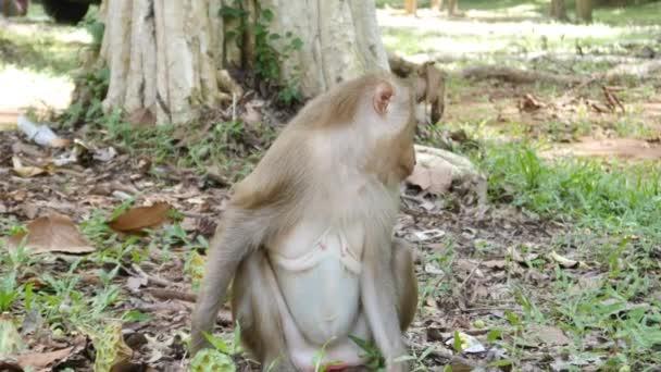 Opice, hledá něco na zem