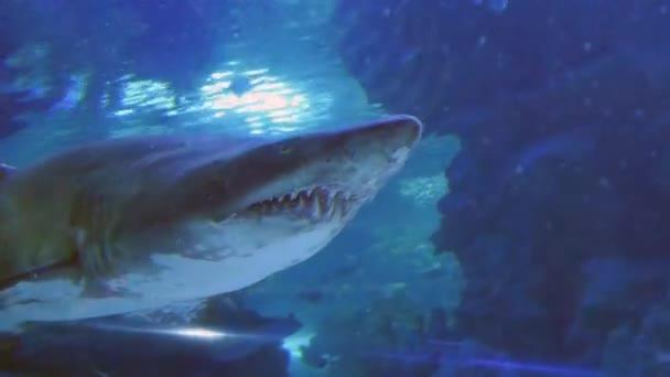 exotische Hai im Unterwasser-aquarium