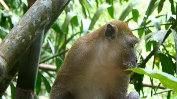 Opice na větvi stromu