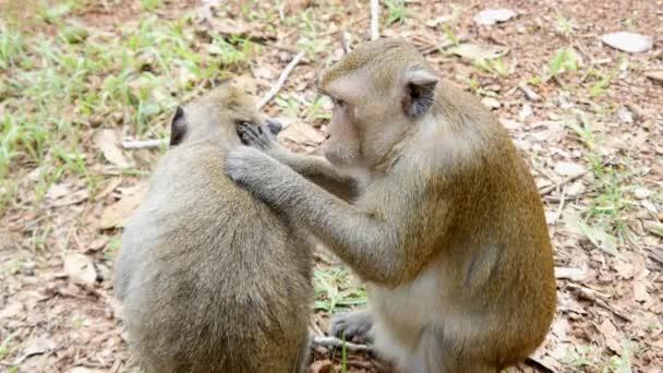 opičí matka a dítě