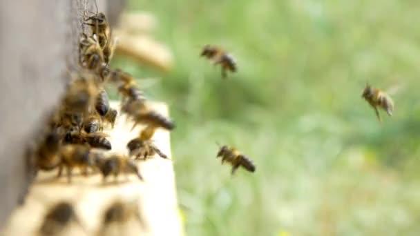 bees on beehive making honey