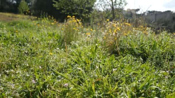 tráva se včelami v poli
