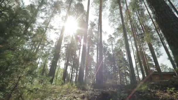sluneční světlo v zeleném lese