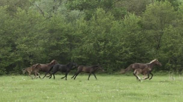 stádo spěchal koně na hřišti
