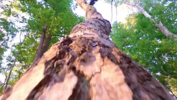 Vzestup na strom