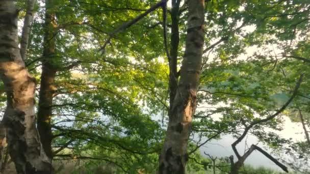 Erdő lenyugvó nappal ősszel. Gyönyörű természet háttér.