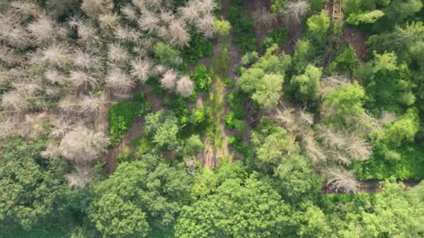 Aerial bird view flying up over beautiful temperate coniferous forest moving over top of trees showing the amazing different green pine forest colors. Air hum, flying low over a dense forest landscape