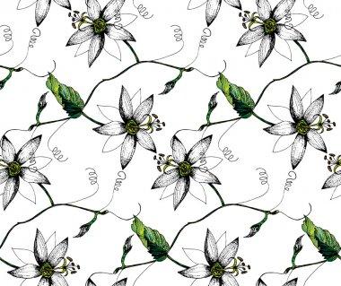 Passiflora flowers pattern