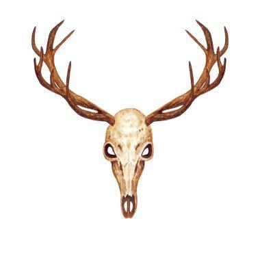 Watercolor Deer Skull