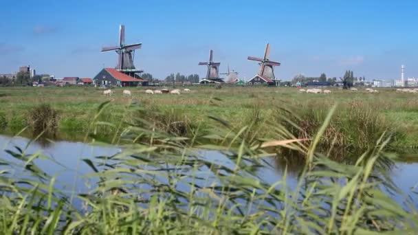 Traditional windmills at Zaanse Schans