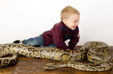 little boy playing with huge snake