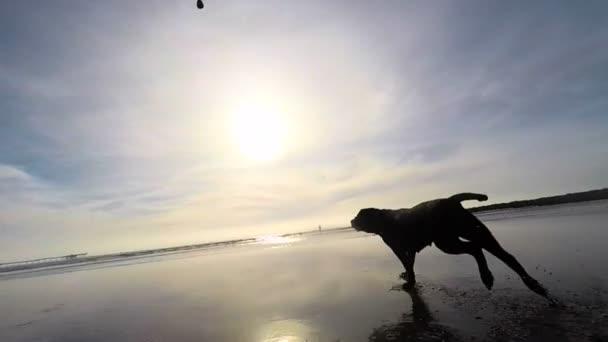 tengerparton futó kutya
