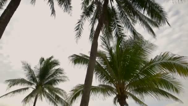palmy na pláži tropického ostrova