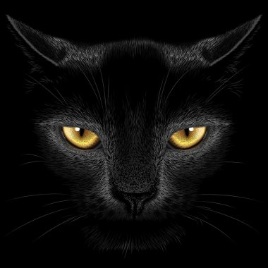 Black cat on a black background