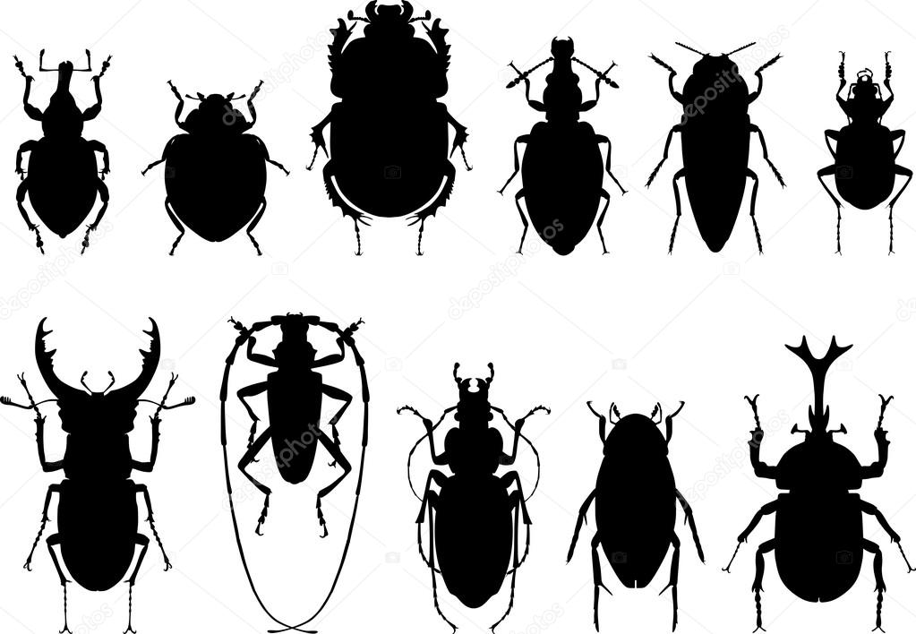 Bugs, black silhouettes on white background. Set of different types of bugs and beetles isolated on white background.