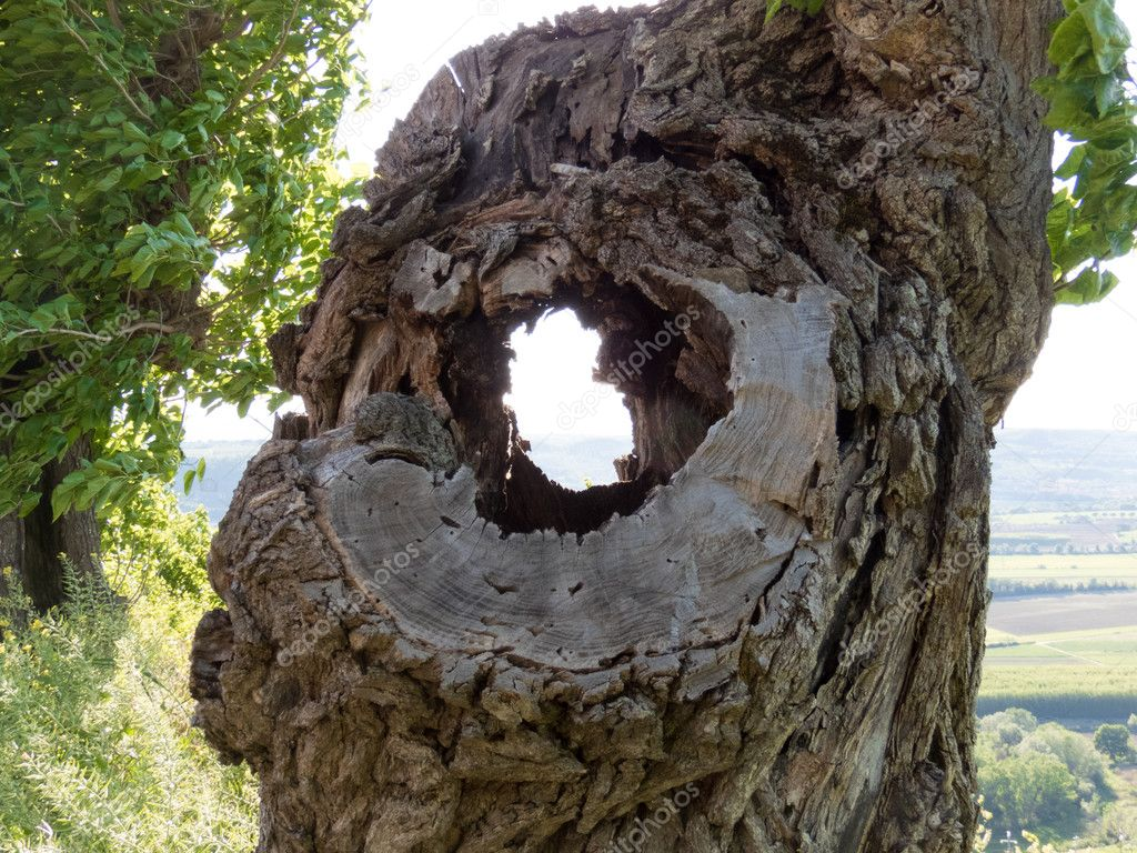 old hole in the tree