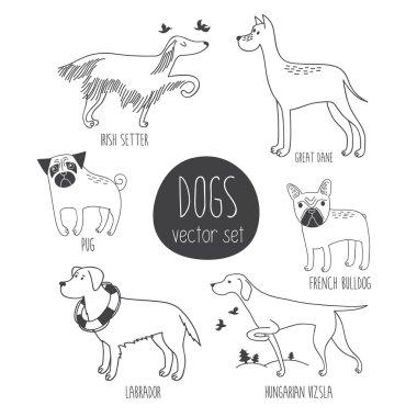 Vector set with cute cartoon dos of different breeds: Irish Setter, Great Dane, Pug, Labrador, Hungarian Vizsla, French Bulldog. clip art vector