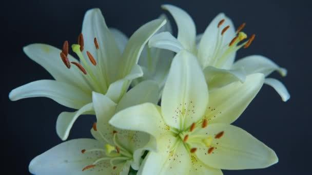 Gyönyörű fehér Lily virágok virágzik a fekete háttér,