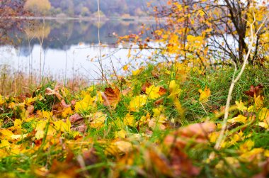Autumn leaves and river