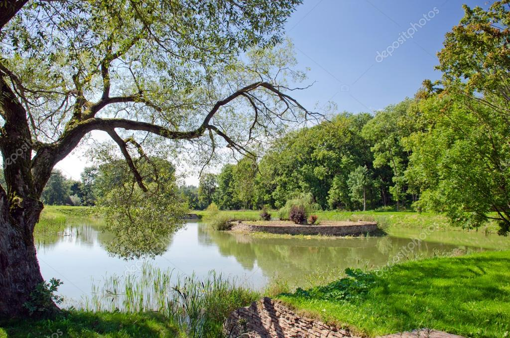 Фотообои Summer landscape with pond and tree