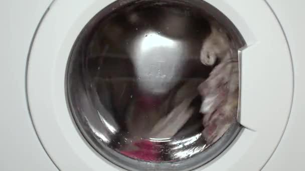 Waschmaschine wäscht Wäsche. Wäsche waschen mit Waschmittel.