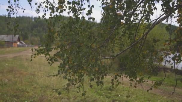 Za Cichorium březové větve prostřednictvím země silnice stojí dřevěné domy.