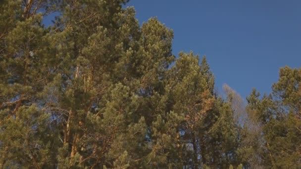 Pohled shora dolů lesa roste na pile území