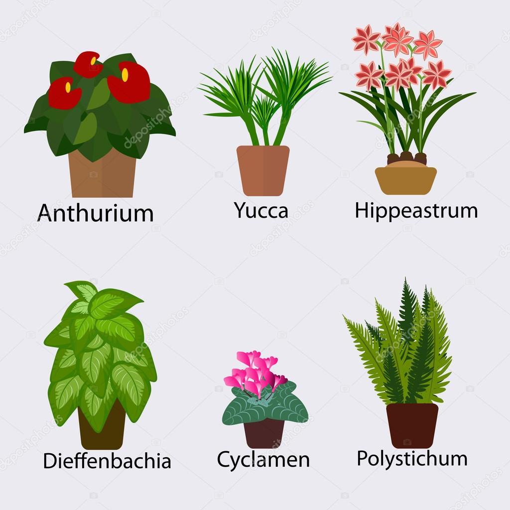 Ilustracion: plantas | Selección de plantas para la ilustración de ...