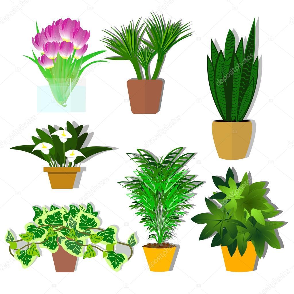 Topfpflanzen Vektor. Eine Pflanze Für Das Büro. Blumen. Eine Reihe Von  Topfpflanzen