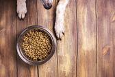 Hund und Schale mit trockenen Kibble Essen