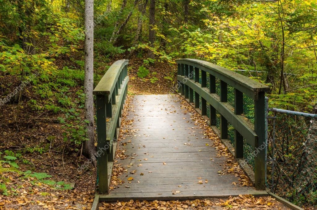 Wooden Bridge along a Forest Path