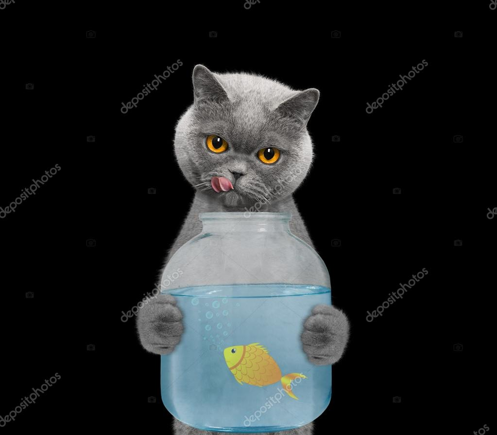 Gatto Sta Andando A Mangiare Il Pesce Da Parte Delle Banche Dell