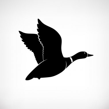 Flying duck vector. Mallard duck flying. Duck flying icon. Duck hunt vector. Isolated vector silhouette of flying duck on background for logotype. Duck flies. Cartoon style.