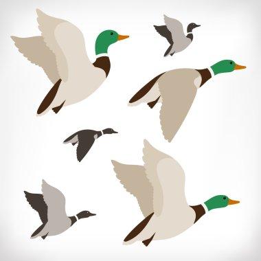 Set of flying wild ducks. Duck hunting. Mallard duck flying. Flock flying to the South. Vector illustration.