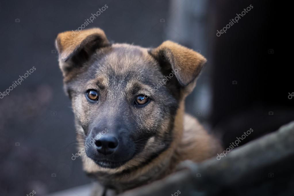 Guter Und Treuer Hund Stockfoto N0varu 108306622