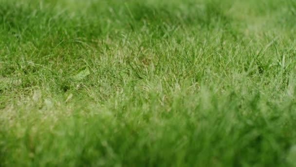 frisches grünes Gras im Garten