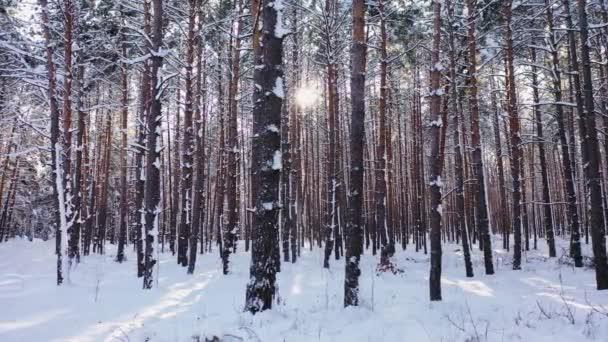Sonnenuntergang im Wald zwischen den Bäumen strapaziert im Winter Luftaufnahme.