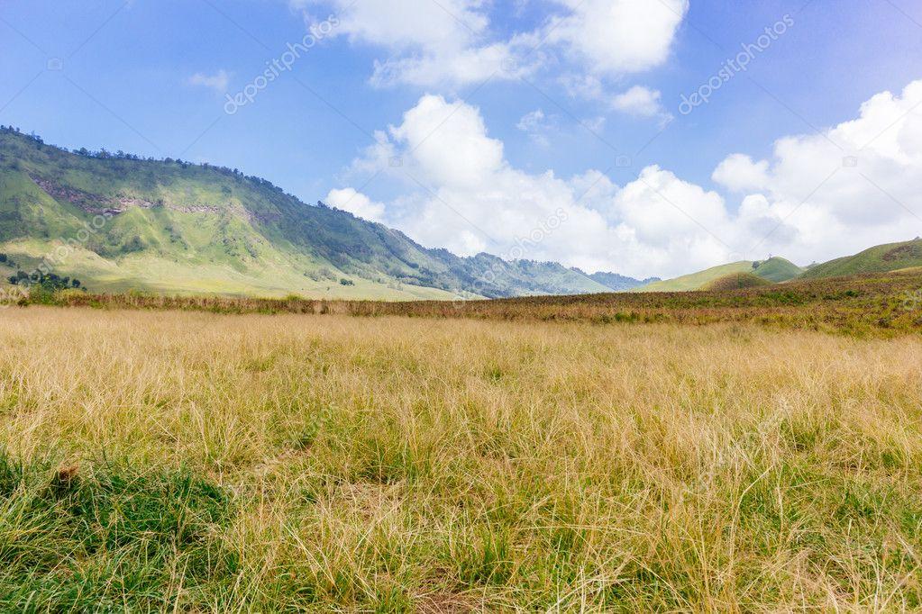 Mount Bromo Savannah