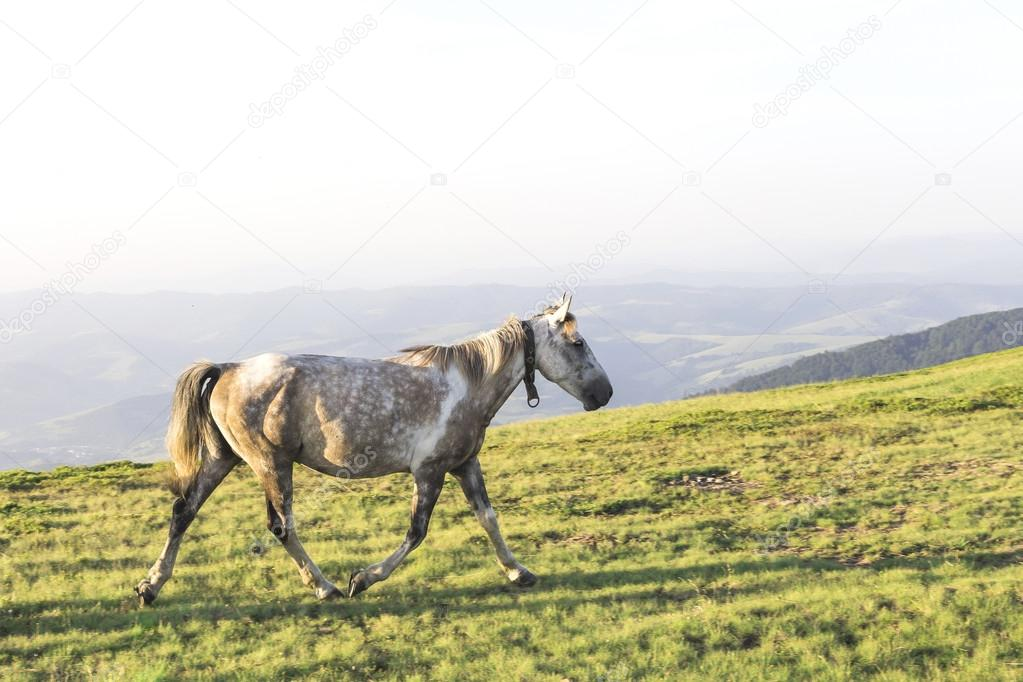 Horses in the mountains landscape