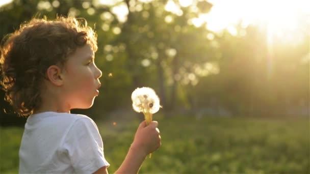 Chlapec na Pampeliška krásný západ slunce světlo