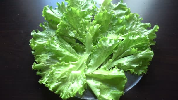 zelený salát a rajčata