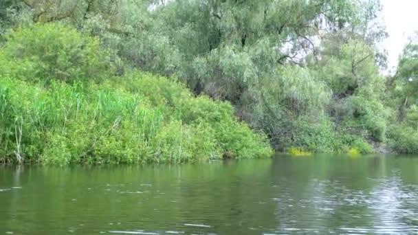 Landscape in Danube Delta