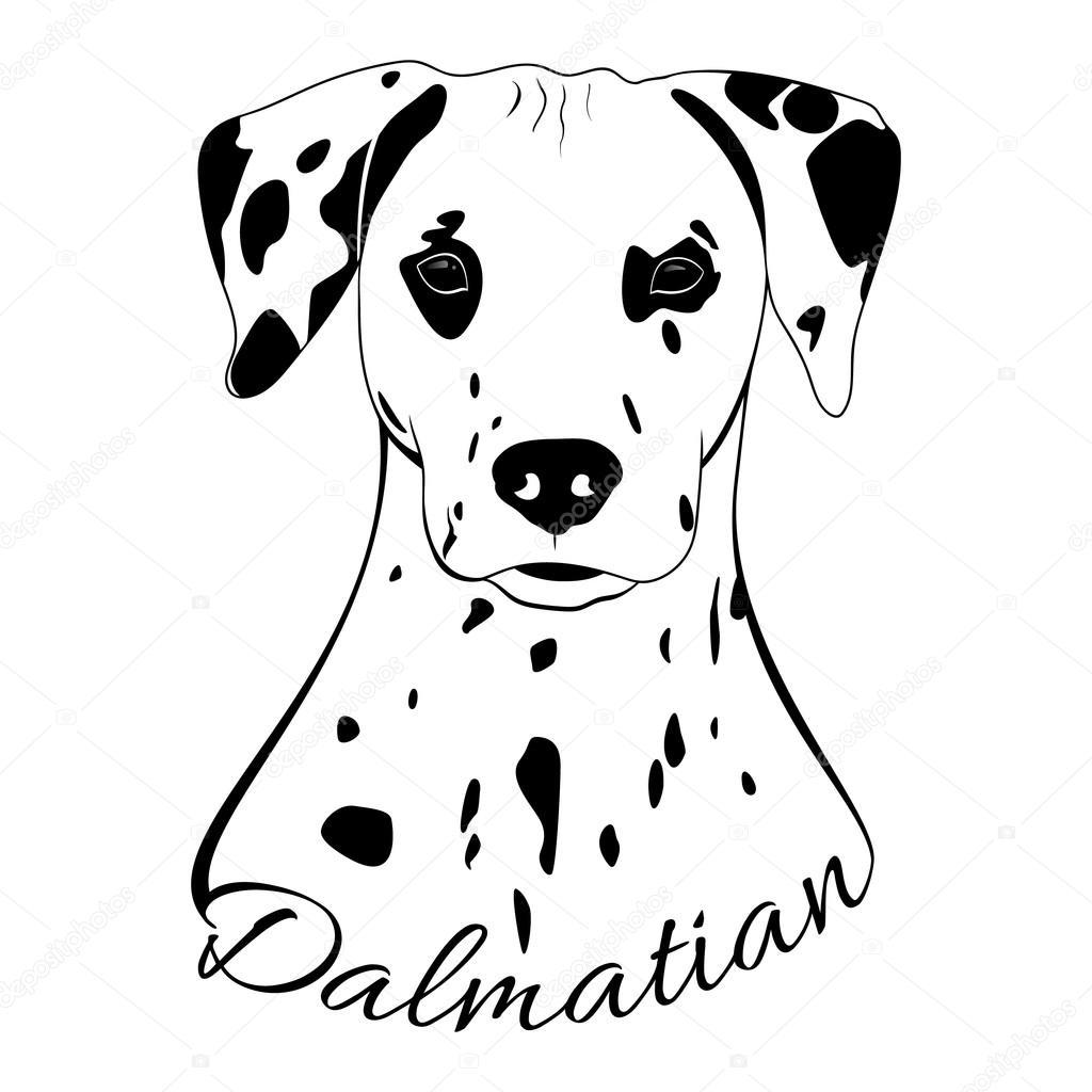 Cabeça De Cachorro Dálmata