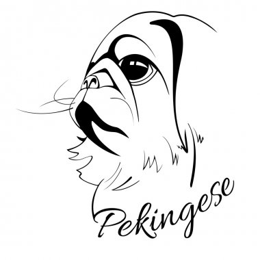 Pekingese dog head