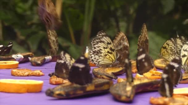 Tropical butterflies flying