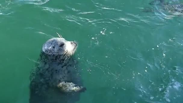 Seals swimming, slow motion