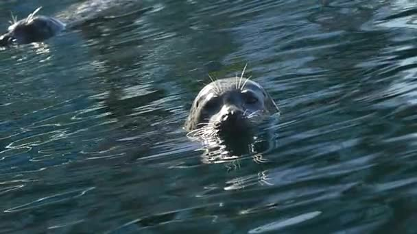 Seal swimming slow motion