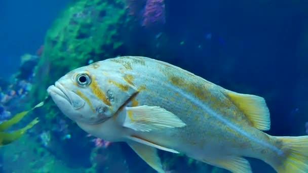 Tropické ryby modré vody closeup