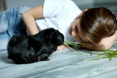 Little girl holding and feeding black guinea pig, domestic animal. Kids feed cavy animals, Trip to zoo or farm, take care of pets. Stay quarantine time kid home.